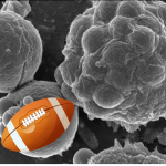 b cells and football